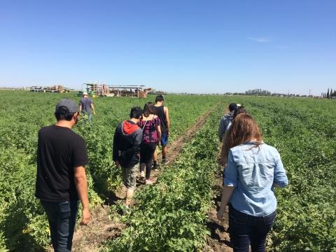 UC Merced students in field